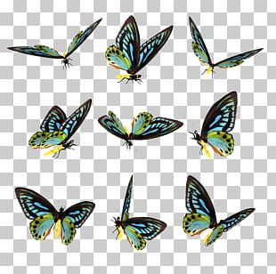 Butterfly Computer Icons Lossless Compression Data Compression PNG