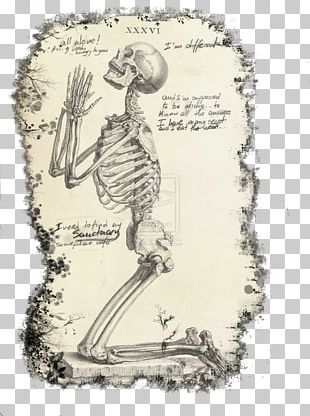 Praying Hands The Anatomy Of The Human Body Human Skeleton Prayer PNG