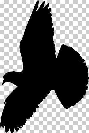 Columbidae Indian Fantail Fantail Pigeon Bird Squab PNG