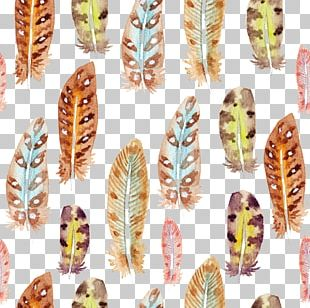Feather Watercolor Painting Drawing PNG