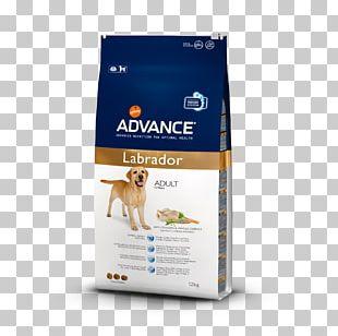 Labrador Retriever French Bulldog Cat Food Puppy PNG