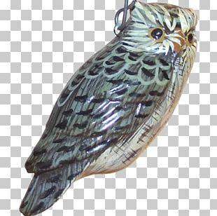Owl Fauna Beak Feather Falcon PNG