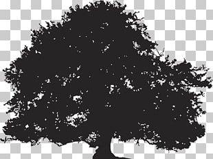 Oak Silhouette Tree Illustration PNG