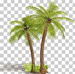 Arecaceae Tree Coconut Shrub PNG