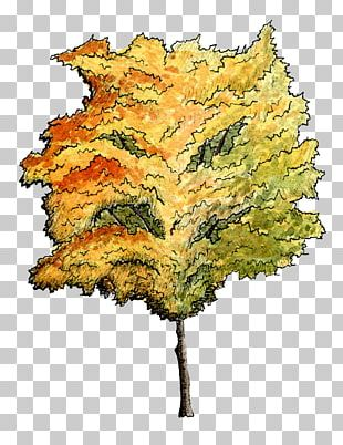 Tree Watercolor Painting Architecture Plant Drawing PNG