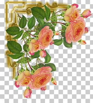 Cut Flowers Garden Roses Color Pin PNG