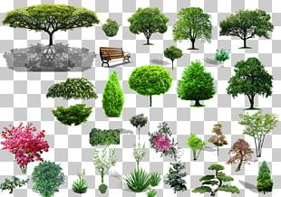 Tree Shrub Landscape PNG