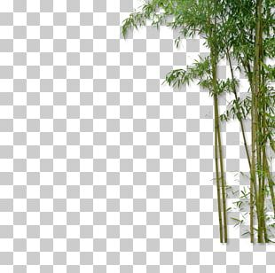 China Bamboo Plant PNG