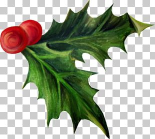 Holly Christmas Day Aquifoliales Adobe Photoshop Photography PNG