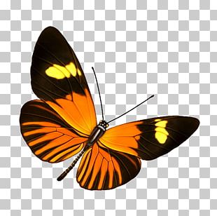 Butterfly Transparency And Translucency Information PNG