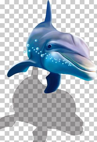 Common Bottlenose Dolphin Shark Wall Decal PNG