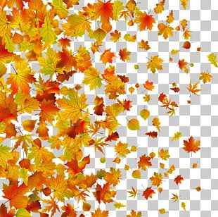 Withered Autumn Leaves PNG