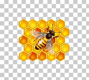 Honey Bee Honey Bee PNG