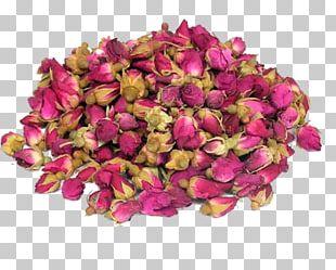 Flowering Tea Beach Rose Drying PNG
