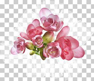 Cut Flowers Petal Floral Design Artificial Flower PNG