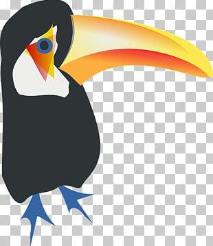 Bird Toco Toucan Parrot PNG