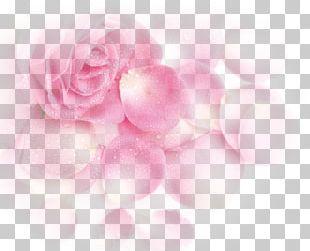 Garden Roses Beach Rose Pink Petal PNG