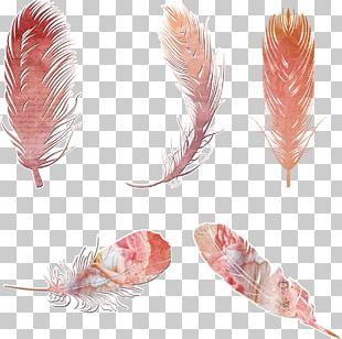 Bird Feather Bohemianism PNG