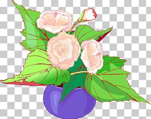 Garden Roses Cabbage Rose Floral Design Cut Flowers Flower Bouquet PNG