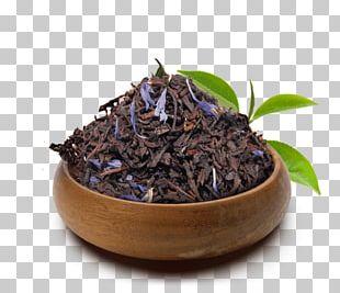 Nilgiri Tea Da Hong Pao Superfood Tea Plant PNG