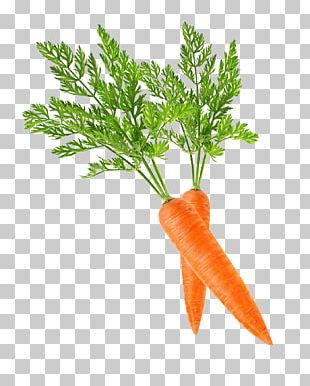 Baby Carrot PNG