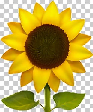 Emoji Common Sunflower Sticker IPhone PNG