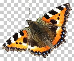Insect Brush-footed Butterflies Small Tortoiseshell Swallowtail Butterfly PNG