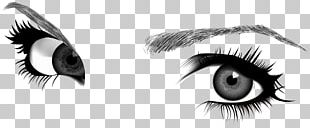 Eyebrow Drawing Euclidean PNG
