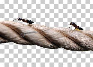 Ants Climbing A Tree Euclidean PNG