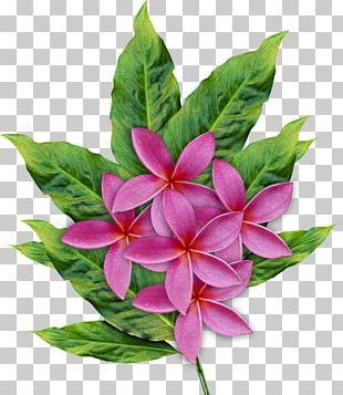 Floral Design Flower Petal PNG