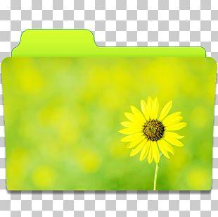 Sunflower Meadow Petal Yellow PNG