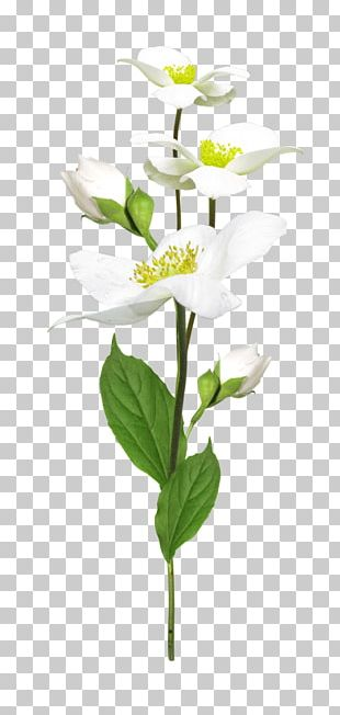 Cut Flowers Flowerpot Artificial Flower Plant Stem PNG