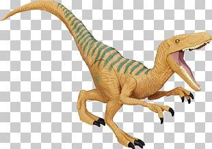 Velociraptor Amazon.com Action & Toy Figures Tyrannosaurus Carnotaurus PNG