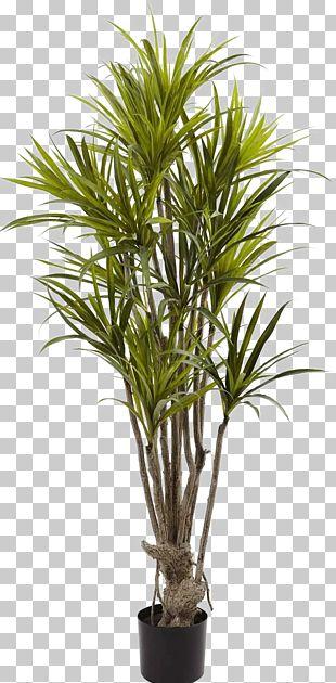 Albizia Julibrissin Dragon Tree Bambusodae Silk PNG