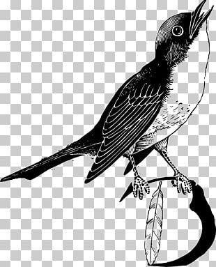 Bird Kiss Feather Parrot PNG