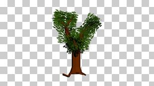 Woody Plant Branch Tree Twig PNG