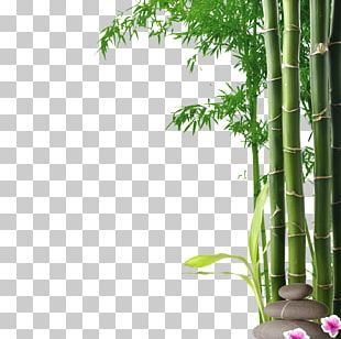 Mural Wall Nature Painting Art PNG