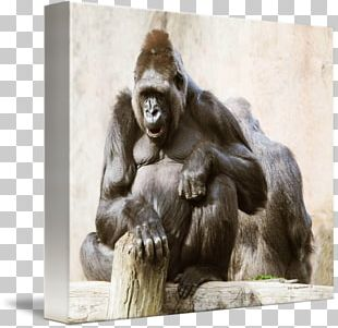 Common Chimpanzee Western Gorilla Monkey Canvas Print PNG