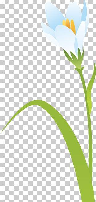 Plant Stem Petal Leaf Flower Branch PNG