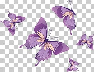 Butterfly Graphics Stock Photography PNG