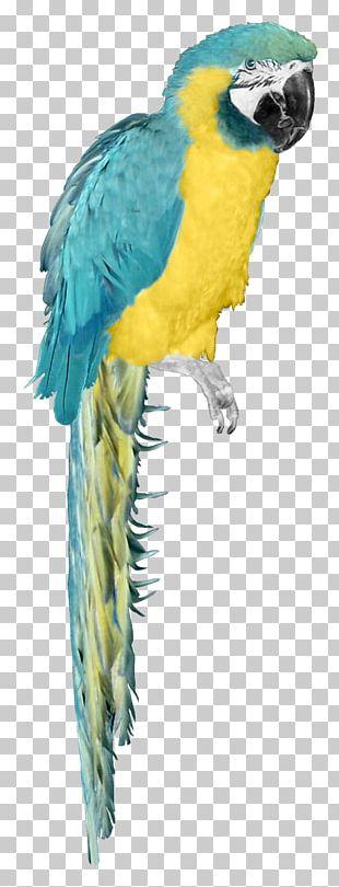 Bird Parrot Atlantic Canary PNG