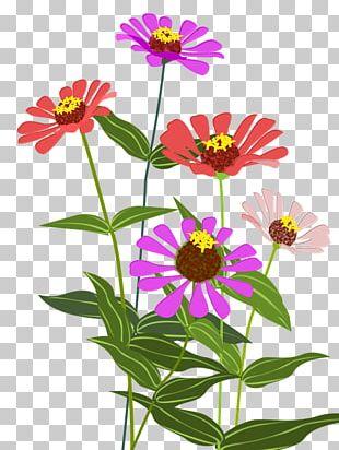 Garden Cosmos Zinnia Cut Flowers Color PNG