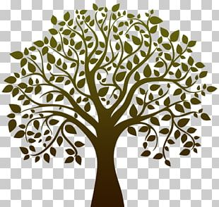 Tree Black And White Drawing PNG