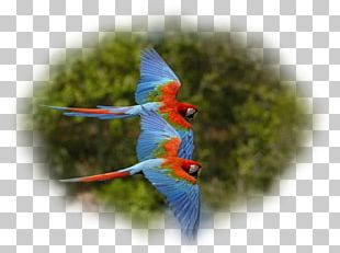 Parrot Bird Red-and-green Macaw Scarlet Macaw PNG