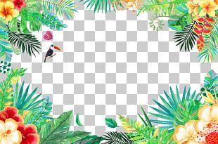 Tropics Tropical Rainforest PNG