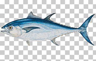 Atlantic Bluefin Tuna Yellowfin Tuna Big-game Fishing PNG