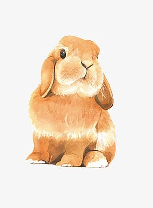 Painted Brown Rabbit PNG