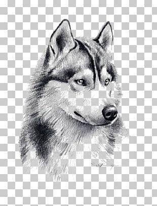 Siberian Husky Puppy Drawing Pencil Art PNG