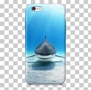 Great White Shark Animal Shark Cage Diving Great Hammerhead PNG