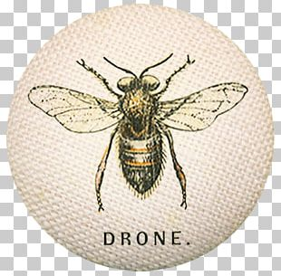 Bee Aircraft Unmanned Aerial Vehicle Drone Quadcopter PNG